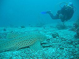 Haitauchen - Tauchen Phuket