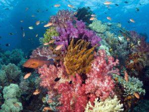 Korallengarten Phuket Tauchschule