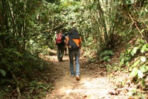 Dschungelwanderung - Kamala Dive Service