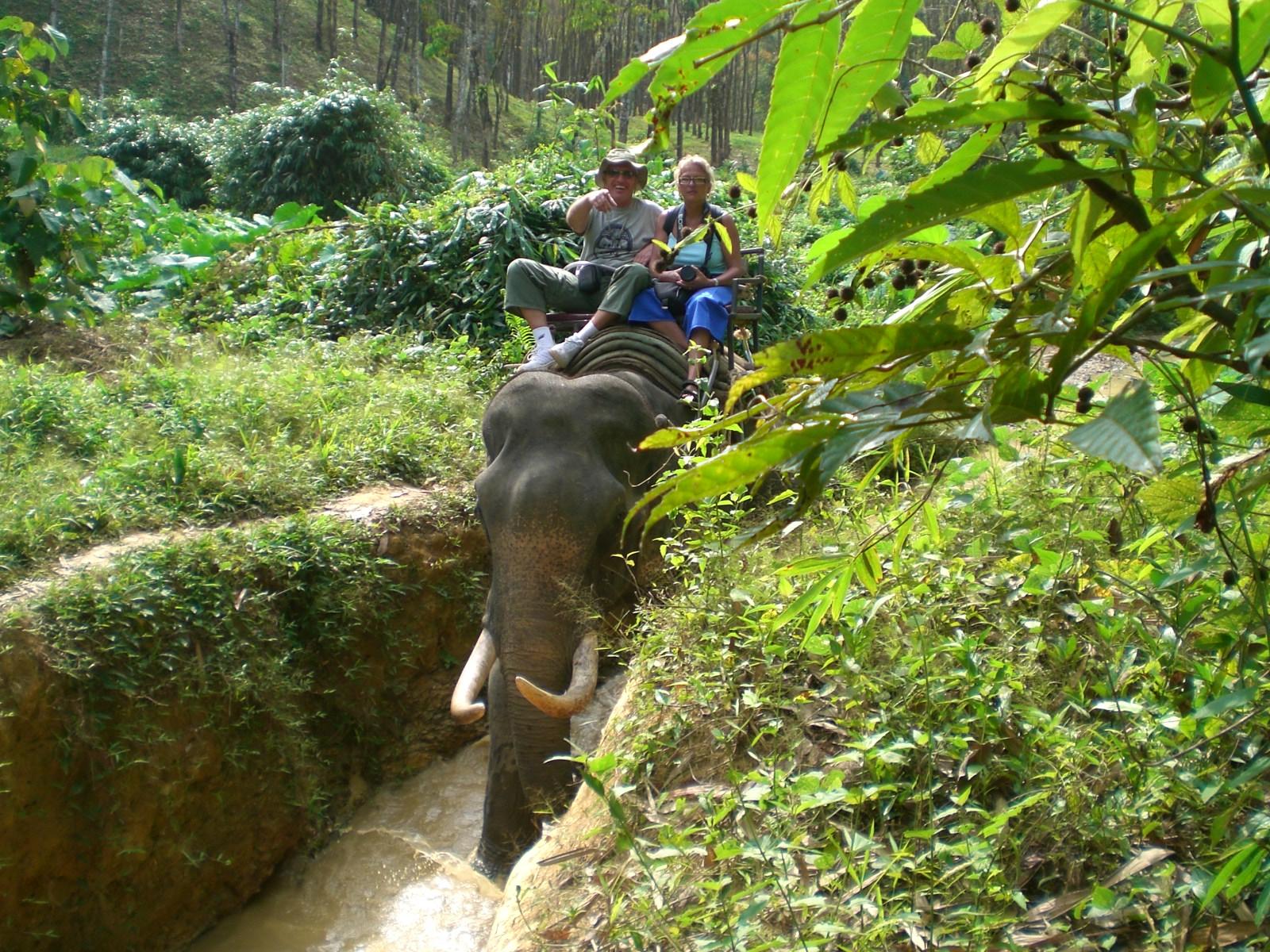 Elephant Trecking - Kamala Dive Service