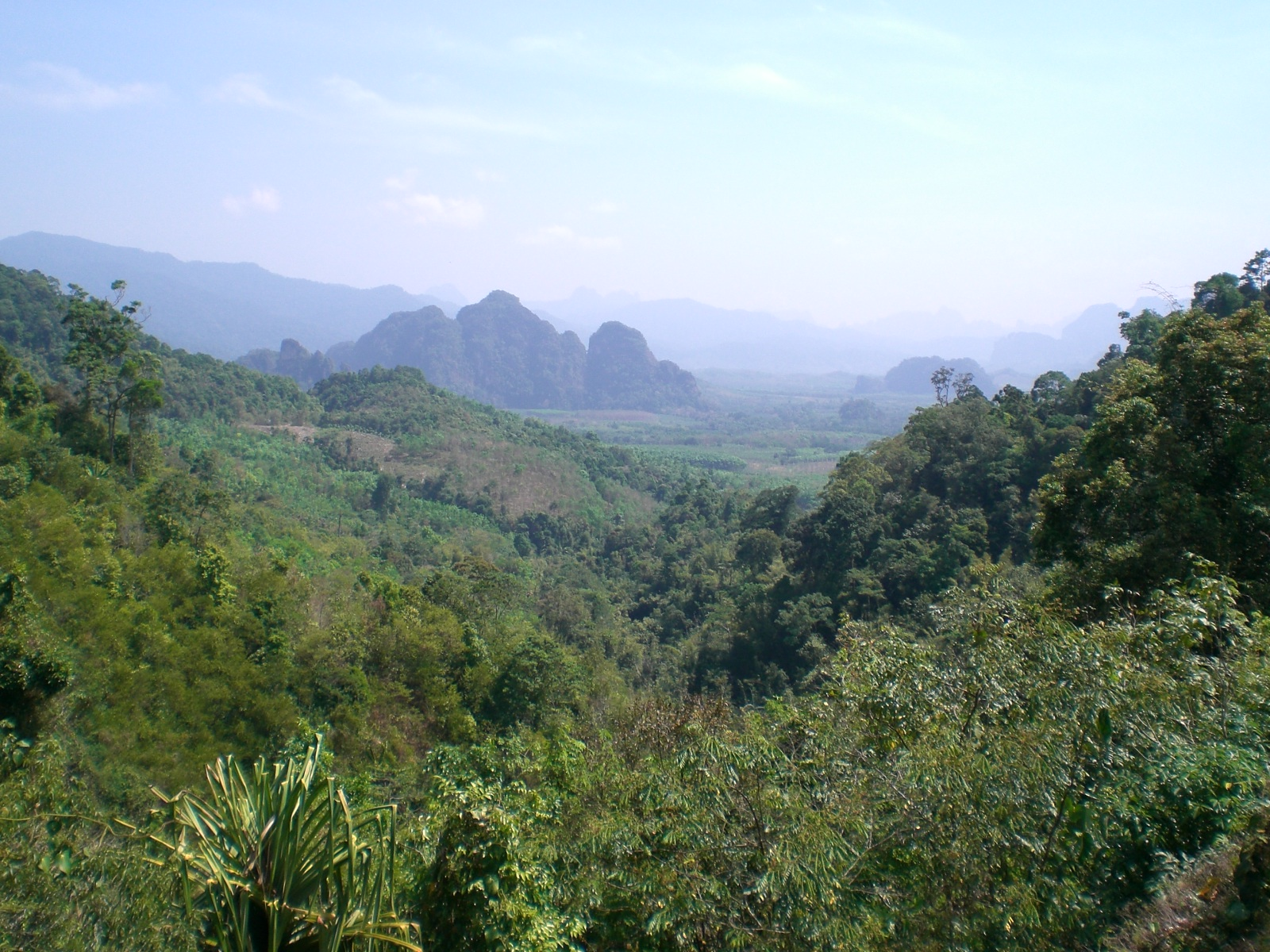 Dschungellandschaft - Phuket tauchen
