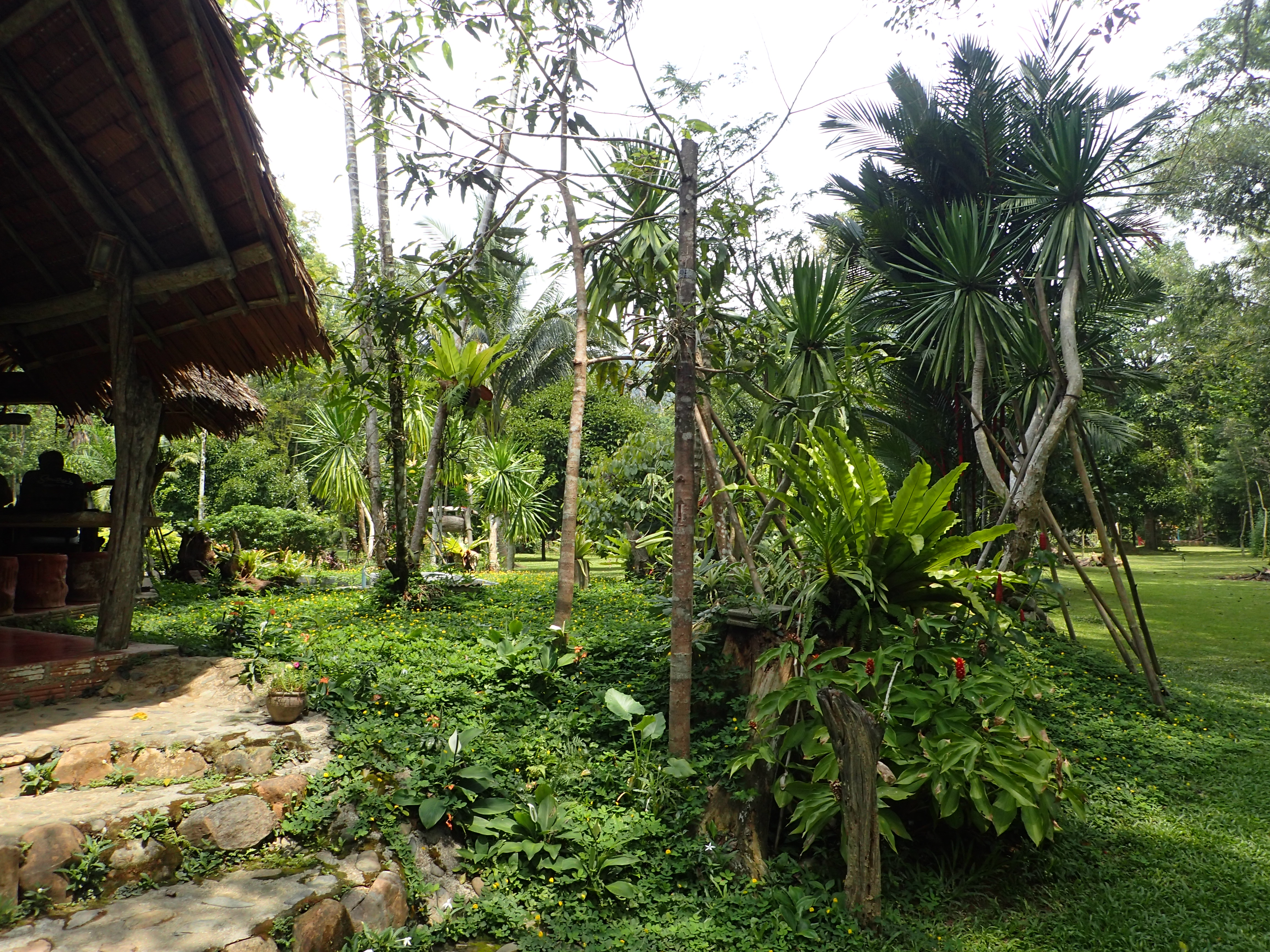 Rainforest Resort - Khao Sok National Park