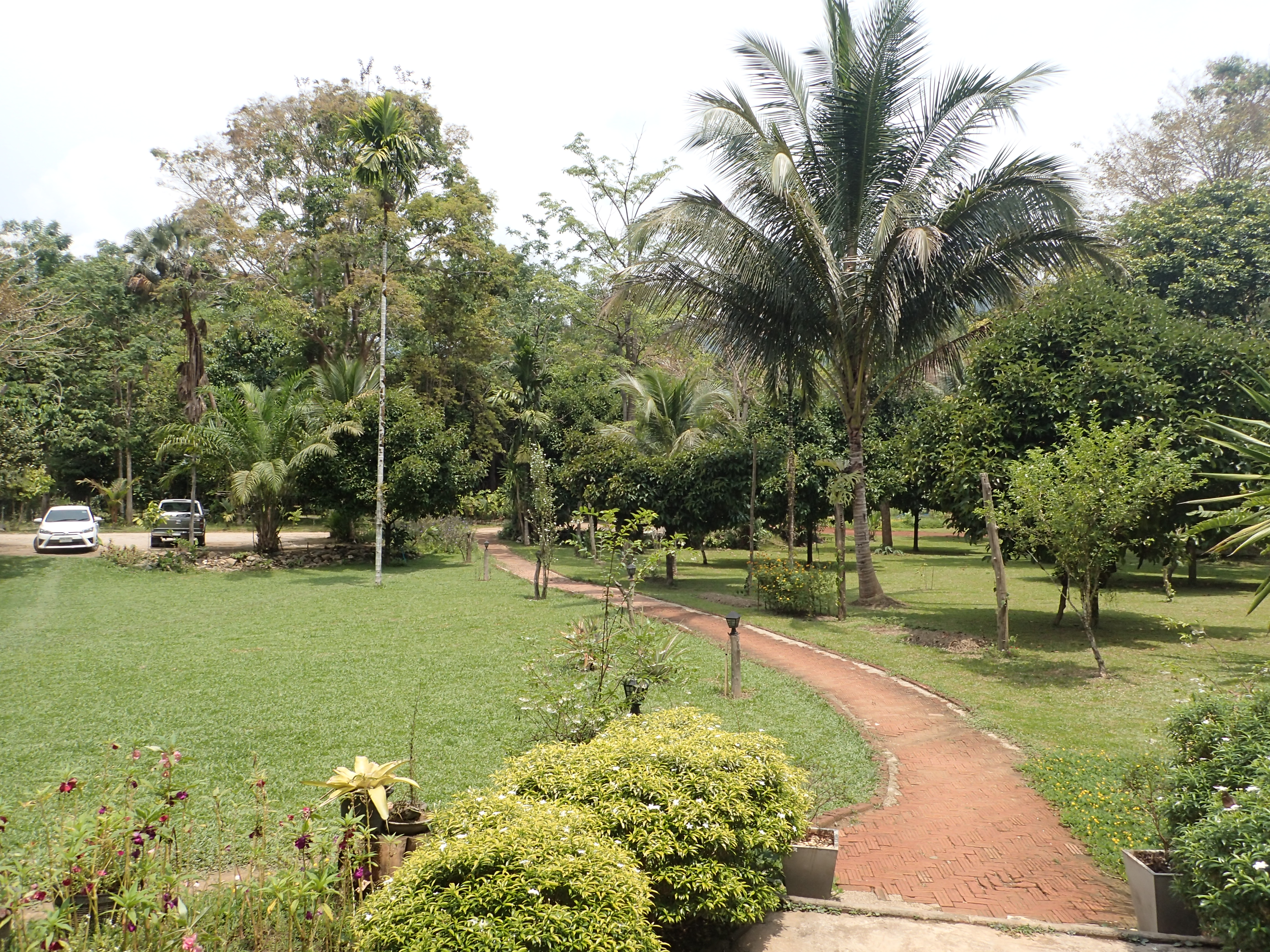 Rainforest Resort - Khao Sok National Park