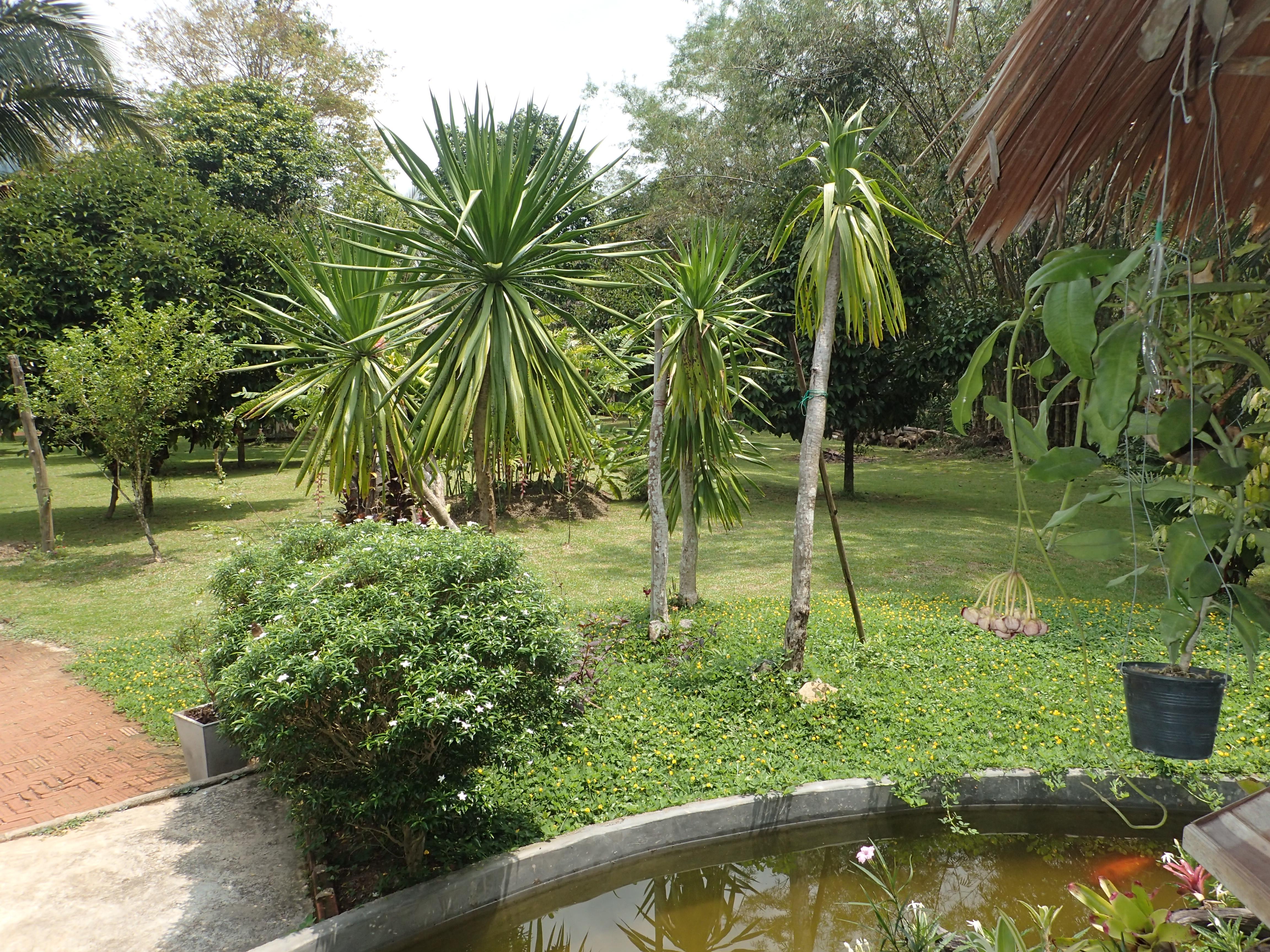 Regenwald Resort - Tauchen Phuket