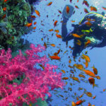 Buntes Riff - Burma und Similan Islands