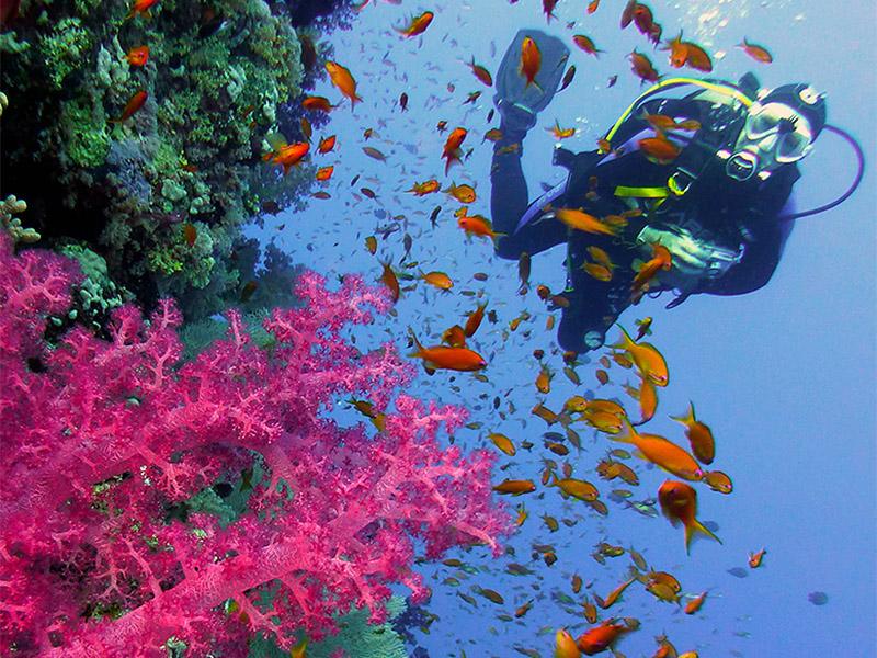 Buntes Riff - similan Islands