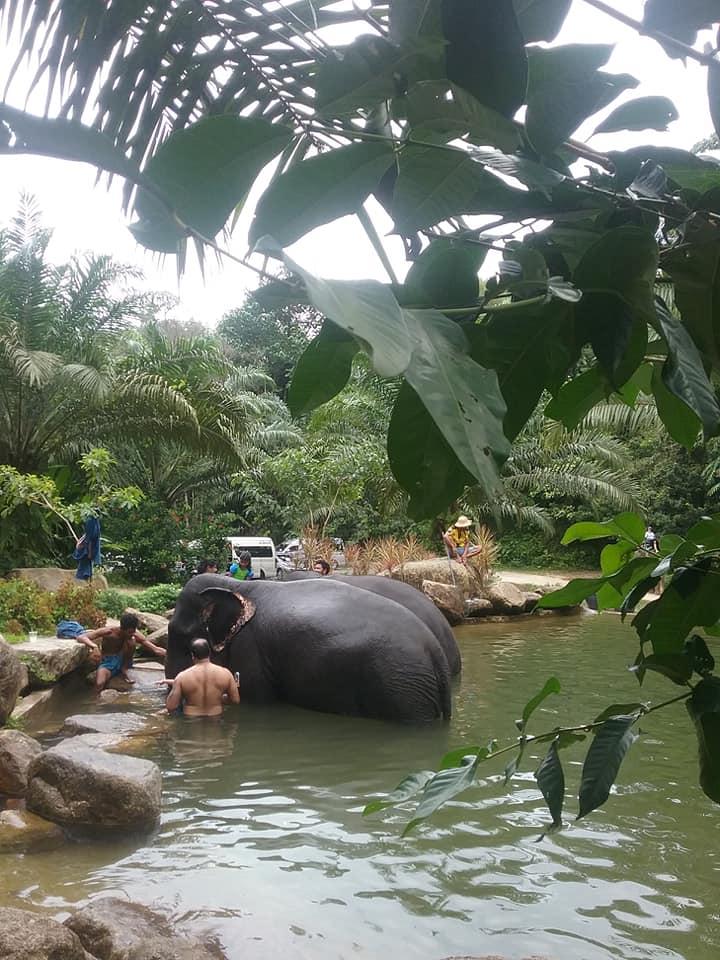 Elefantencamp - Tauchen Phuket