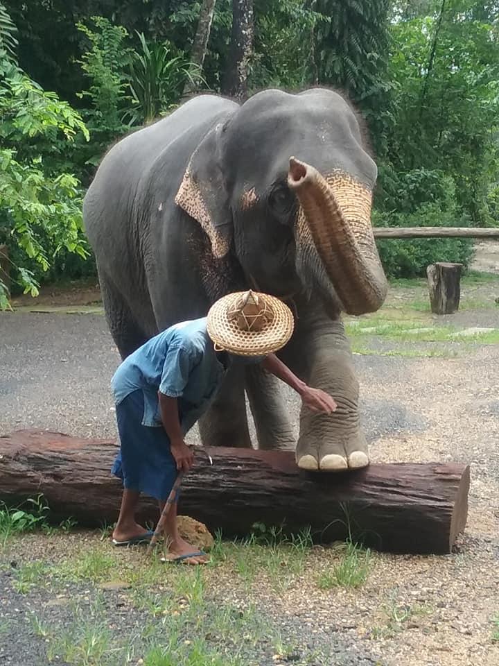 Im Elefantencamp mit Phuket Tauchen