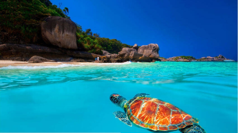 Wasserschildkröte - Tauchsafari Similan Islands