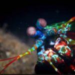 Mantasshrimps - Diveshop Phuket