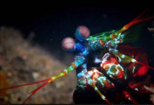 Mantasshrimps - Diveshop Phuket