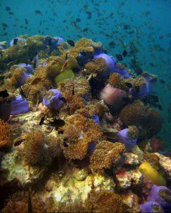 Anemonen Riff - Tauchschule Kamala Beach