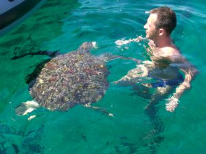 Wasserschildkröte - Kamala Dive Service