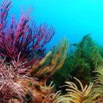 Hornkorallen - Kamala Dive Service