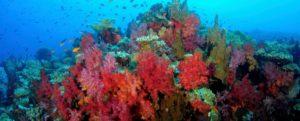 Korallenriff - Kamala Dive Service