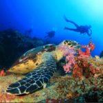 Schildkröte - Tauchen Burma